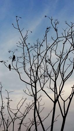 birds on branch: twin birds on dry tree branch Stock Photo