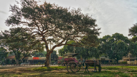 horse cart: Horse cart under a big tree Stock Photo
