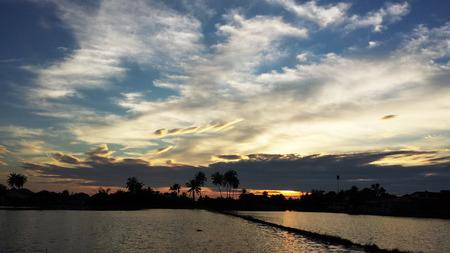 paddy field: paddy field sunset