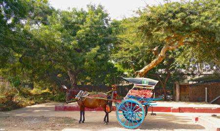 horse cart: Horse cart under big trees