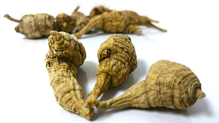 American Ginseng over a white background