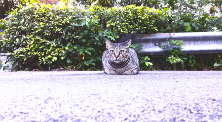 Street Cat looks directly into the camera