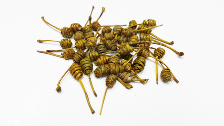 Traditional Chinese Herbs - Dendrobii