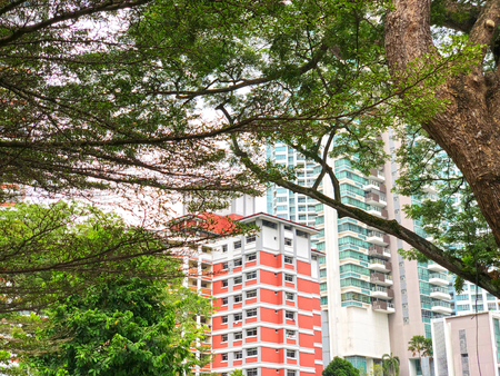 Tree branches with residential blocks as background Stock Photo