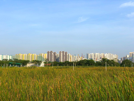 Distant view of Singapore modern residential building over green field