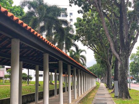 Sheltered walkway in between rows of tree 写真素材