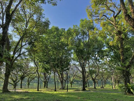 Beautiful park full with greenery and trees during summer Stock Photo