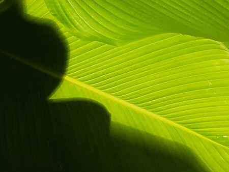 Shadow casting on green leaf with texture pattern. green, ecology and environmental concept