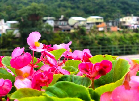 focused view of beautiful pink flower