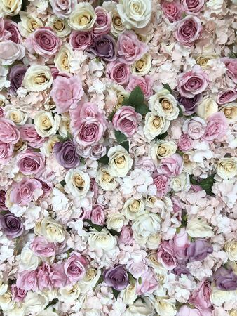 wall full of roses flowers, background with roses of different colours Stock Photo