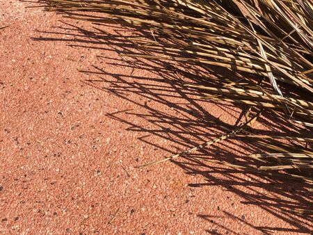 Abstract image of dried coconut leaf on the ground with shadow