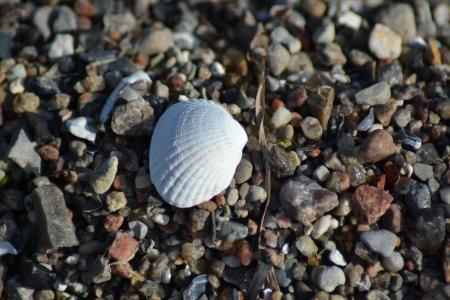 wasser: Muschel auf Steinen