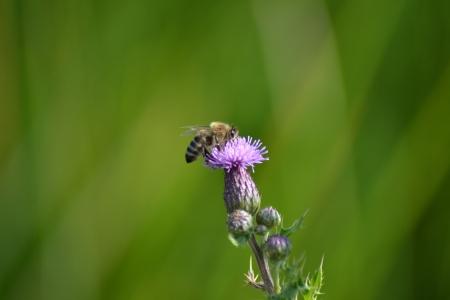blume: Biene auf Blume Stock Photo