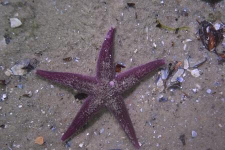 Seestern auf Meeresgrund