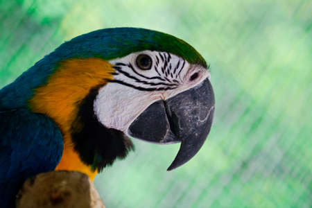 Portrait of a brightly colored Macaw Stock Photo - 14495224