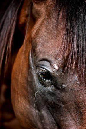Profil von Pferd s Gesicht close up Standard-Bild