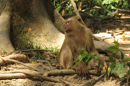 singly: monkey sitting on the root tree Stock Photo