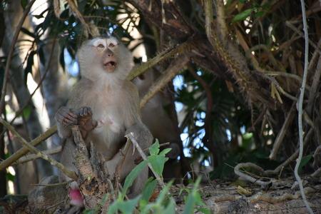 singly: monkey in the wild