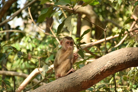 solely: monkey eating on the branch Stock Photo