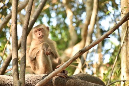 singly: monkey in the wild