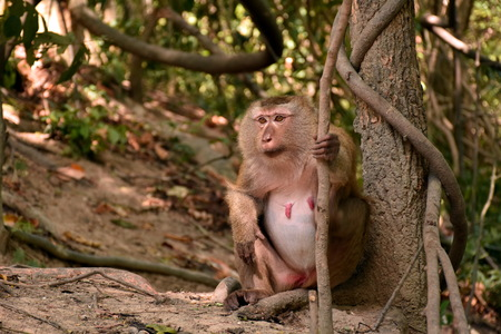 solely: pregnant monkey sitting on the branch