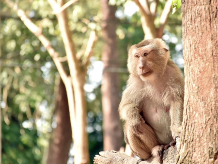 singly: monkey sitting on a tree
