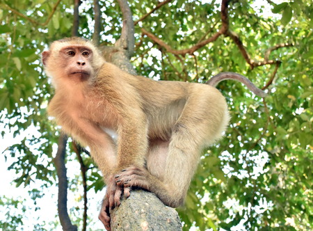 solely: monkey stand on a tree