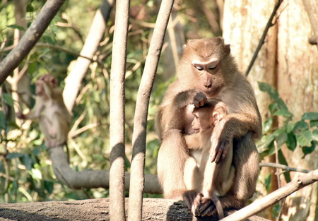 receive: Baby monkeys receive care from his mother