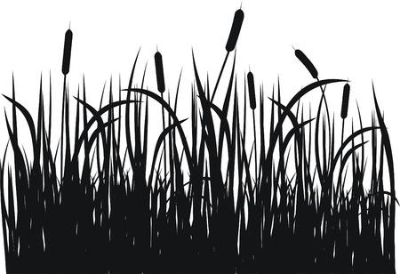 rietkraag: Gras vector silhouet