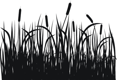 canes: Grass vector silhouette