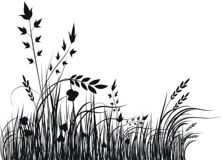 wild grass: Grass vector silueta Vectores