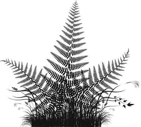 ferns: Grass vector silhouette with fern leaves