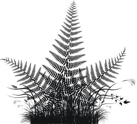 ferns: Grass vector silueta con hojas de helecho