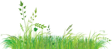 Green grass Stock Vector - 5379368