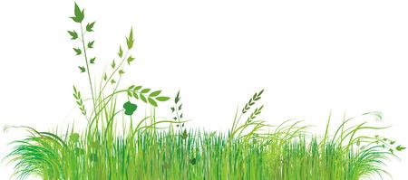 Green grass Stock Vector - 5379368