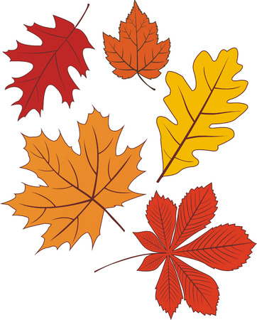 Collection of autumn leave shapes