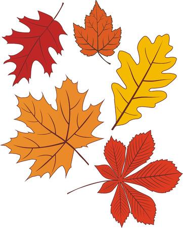 foglie di quercia: Insieme di forme di congedo autunno