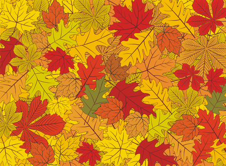 Autumn leaves vector background Vector