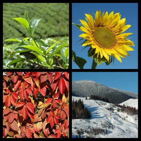 Four seasons - nature collage  photo