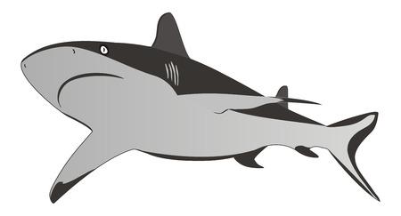 Shark - dangerous sea predator Vector