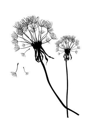 black seeds: Two black dandelions,illustration Illustration