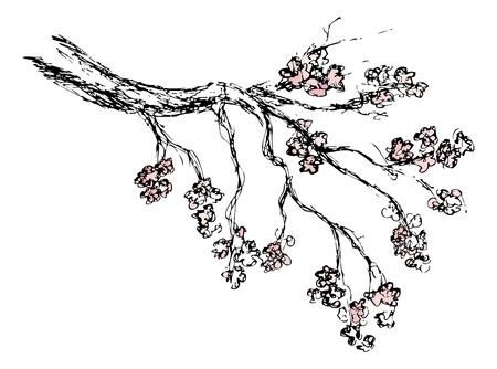 cherry blossom tree: Spring sakura blossom drawing - vector illustration