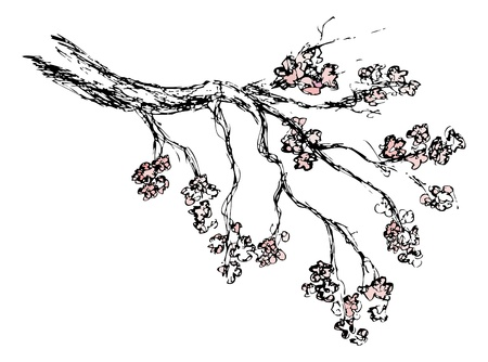 Spring sakura blossom drawing - vector illustration