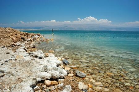 arboles secos: Costa del Mar Muerto, Israel Foto de archivo