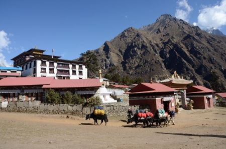 Tengboche,Nepal, April 19,2013- local people with yak caravan passing by famous buddhist monastery It is one of most famous monasteries in Everst region