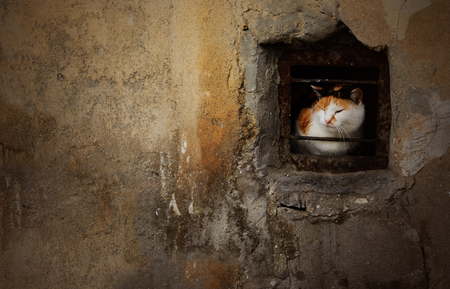 desease: Dramatic portrait of street stray cat sitting in the small basement window of abandoned house