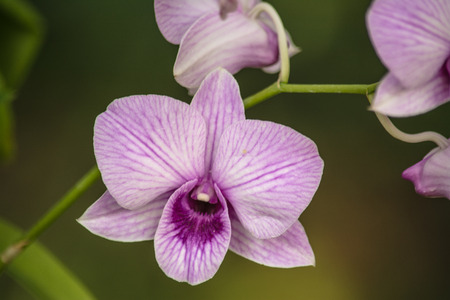 Orchid park is the beautiful orchids set in a delightful natural environment. Stock Photo