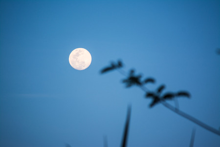 The Moon is an astronomical body that being Earths only permanent natural satellite.