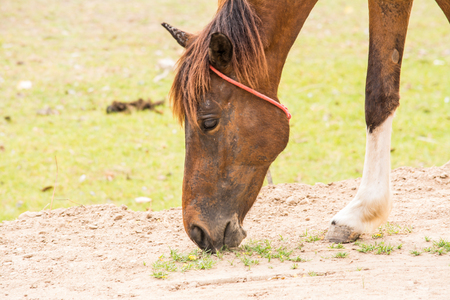 Horse is a mammal that involve many human activities as sports, recreational work.