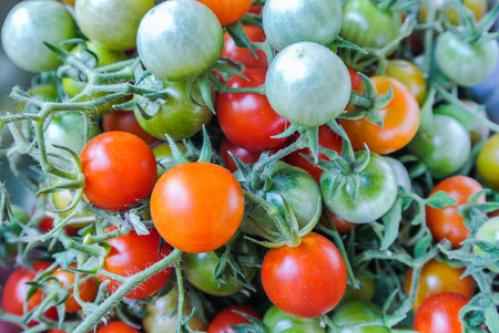 The tomato vegetable of the plant Solanum Lycopersicum that belongs to the nightshade family Stock Photo - 98897331